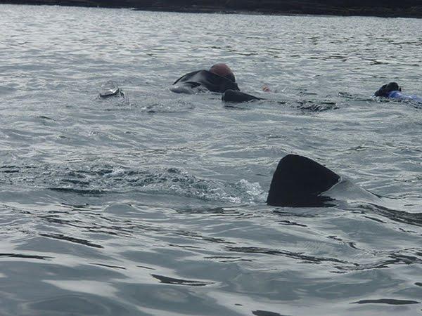 10m laang, e puer dausend Kilo schwe'er, einfach eng Nummer ze grouss.  Riesenhai'en