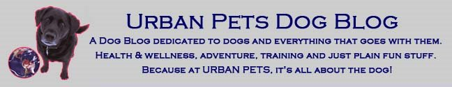 Urban Pets Dog Blog