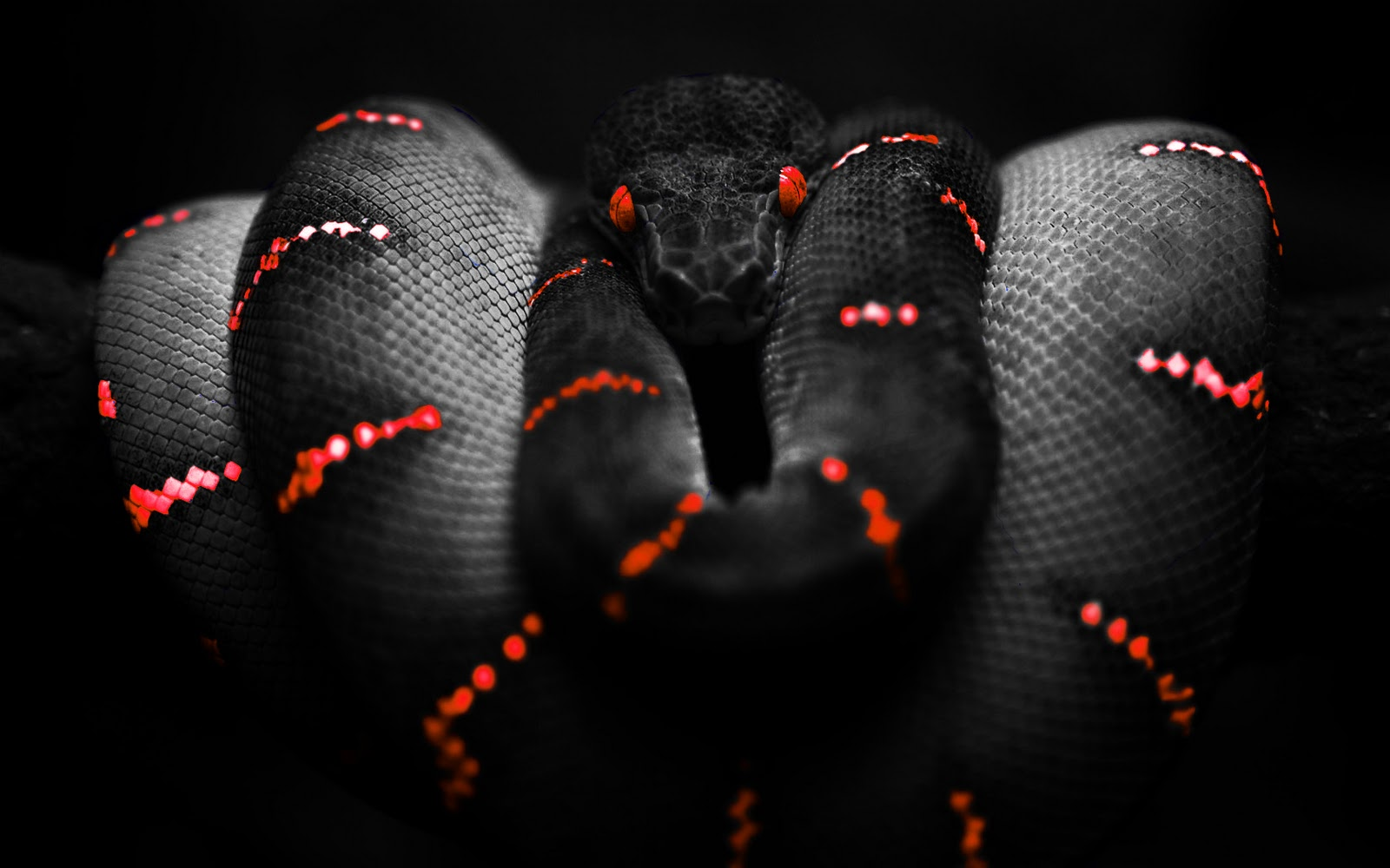 Wallpapers Box: Photoshop Snake High Definition Wallpapers