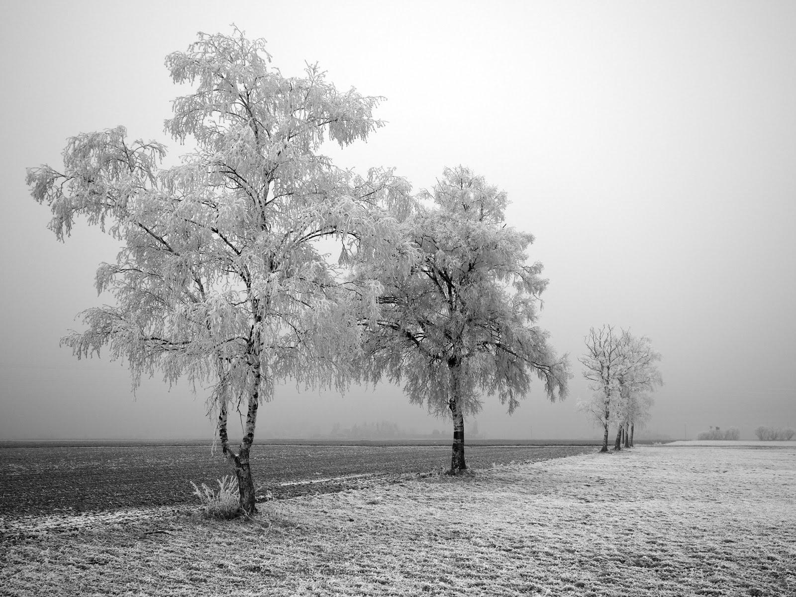 frozen trees widescreen wallpaper - photo #10
