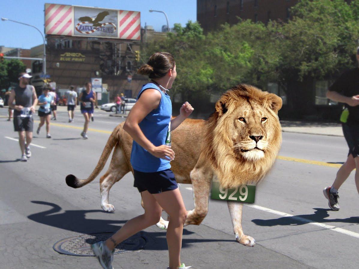 True American Dog: Lion Runs Town Marathonmarathon town