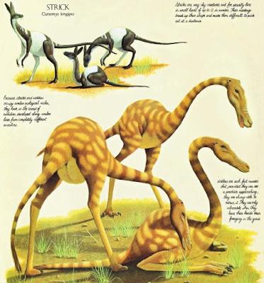 Mundo Alienígena - Demu - [ECO] [ARREGLADO] - Página 3 Cursomys+longipes+y+annabracchium+struthioforme