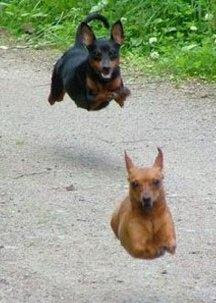 Secretly taken photo of Hover Pups