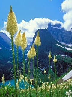 free Samsung corby wallpaper glacier national park