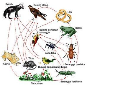 bahan ajar ekosistem