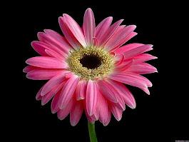 FLOWER GARDEN 21