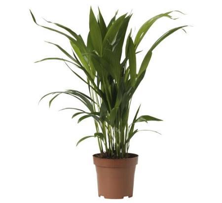 Salud belleza y hogar enero 2011 - Plantas para macetas exterior resistentes ...