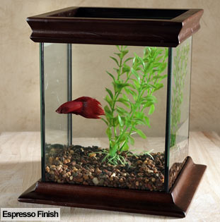 Betta Fish Care on Taking Care Of Betta Fish