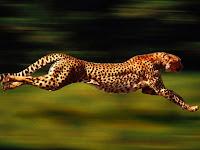 10 Binatang Tercepat Di Dunia