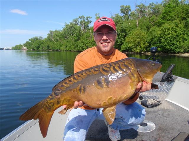 The fishing news chicago 39 s golden dorado for Golden dorado fish