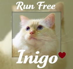 Inigo ~ You were a great mancat
