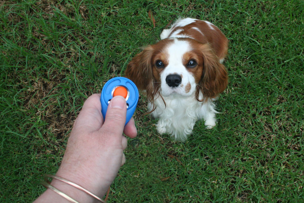 Clicker Training For Blind Dogs