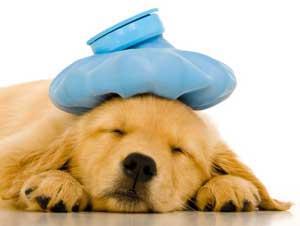 Bir köpekte ishale neden olabilir