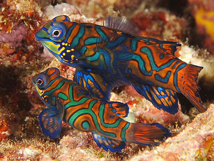 Damn Fresh Pics Most Colorful And Beautiful Fishes