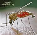 Penyebab nyamuk menggigit tubuh kita,nyamuk,digigit nyamuk,vampir mungil,memburu darah