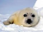 Apoye la Declaración Universal para el Bienestar de los Animales