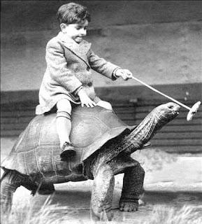 Protection des tortues géantes en voie de disparition