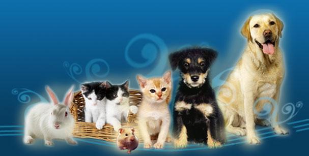 Lacasademascotas accesorio para mascotas - Todo para nuestras mascotas ...