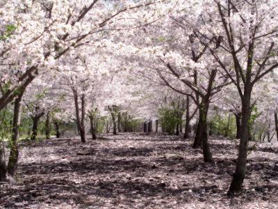 Domina(Invitados solamente) Bosque+de+cerezos