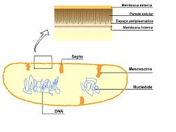 """""""outro esquema de uma celula procariota""""(turma 106)"""