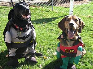 BATMAN  ROBIN Funny Dogs in Costume Humor Photo
