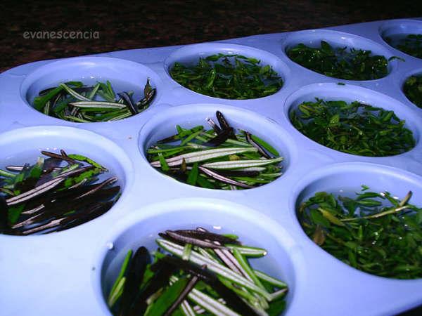hiervas aromaticas antes de congelar