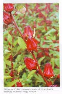 Lulur bunga rambai image - briony mcroberts eastenders pictures of spider