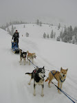 Mushing For A Living