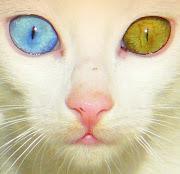 Un ojo marron y el otro a-zulado