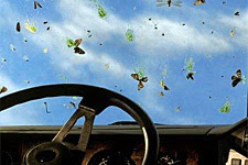 bugs on a windshield