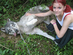Fearless Summer Petting Wolf