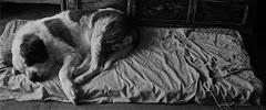 Perra Orillera sueña