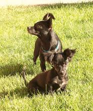 My Doggies!