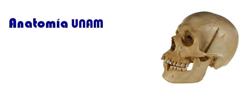 Anatomía UNAM