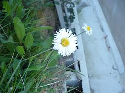 si te gusta la primavera....