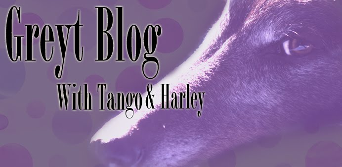Greyt Blog