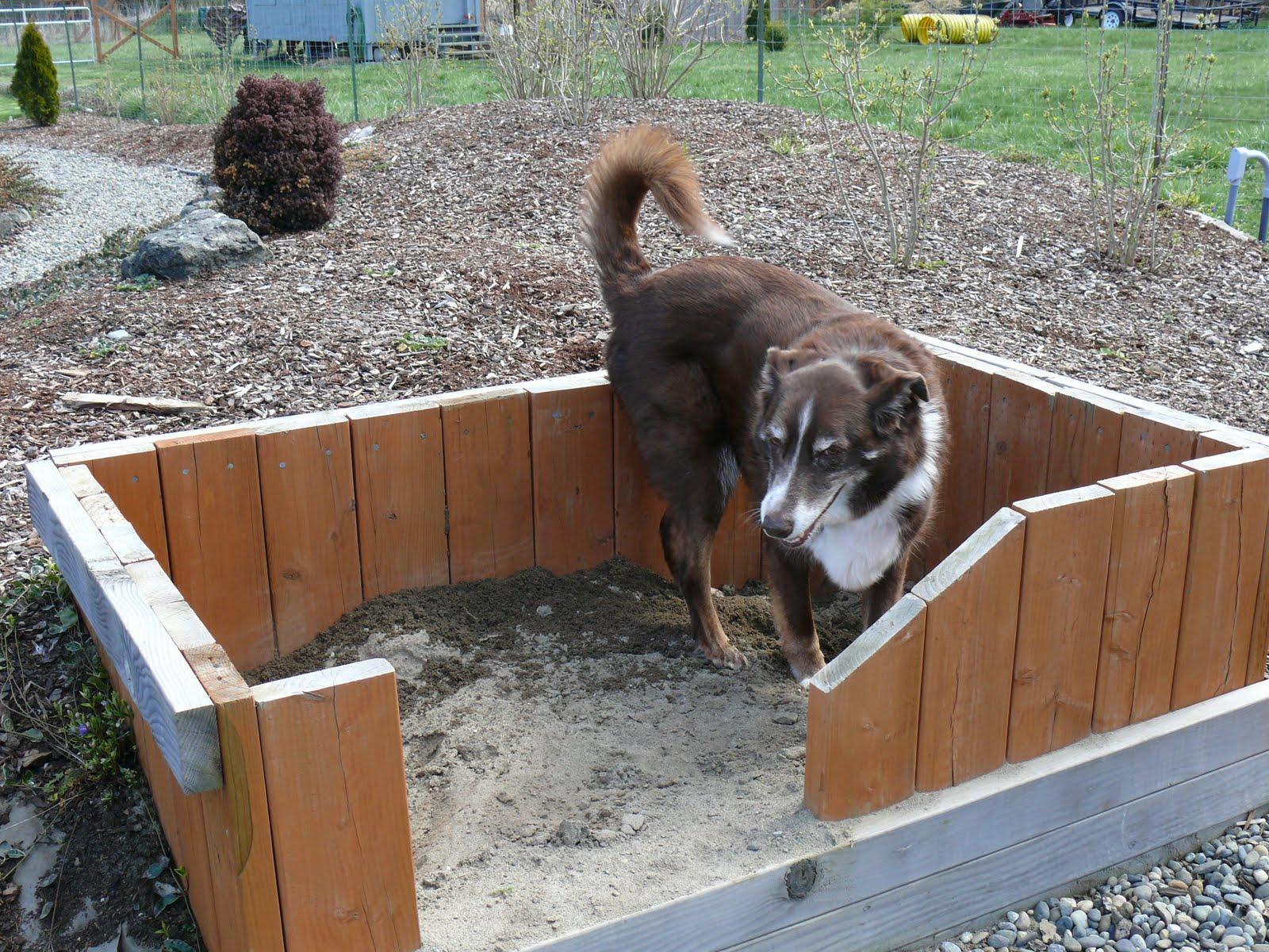 Dog Friendly Backyard Ideas beautiful garden landscaping ideas for dogs 28 inside inspiration article April 20 2010
