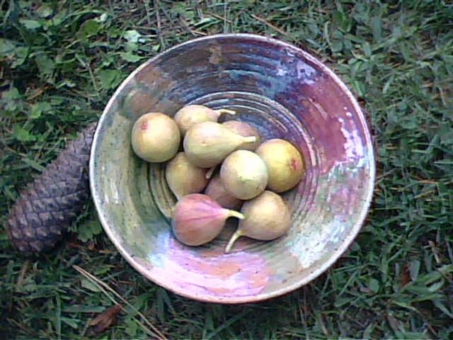 [figs]