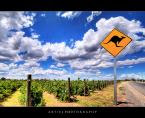 Truly Australia:  Kangaroos and the Vineyards