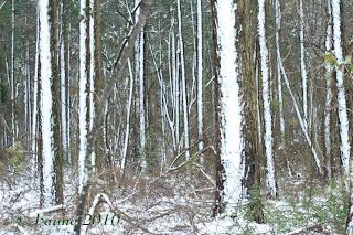 Snow in Currituck