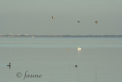 A variety of birds on the Currituck Sound