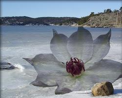 Isen blommar