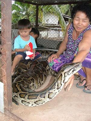 15-Foot Python as a Pet