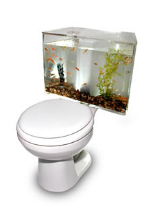 Toilet With A Aquarium