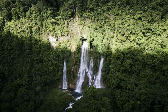 Hasil gambar untuk hutan papua yang belum terjamah