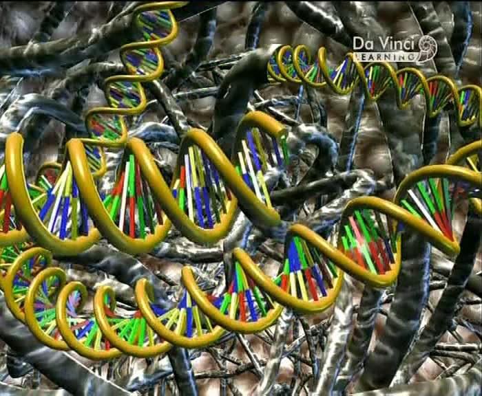 Da vinci learning gen teknolojisi dvdrip tr