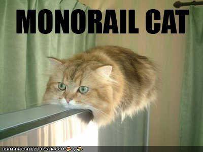 Lolcat Lolcatz Lowlcaz wallpaper funny_pictures_monorail_cat1_Lolcatz