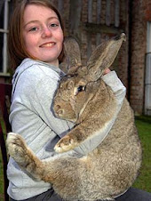 The World's Largest Rabbit