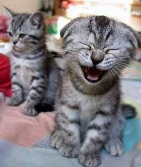 laughter-funny-cat-laugh.jpg