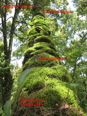 TREE-MOSS02